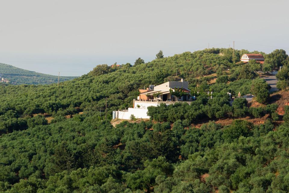 ślub nad gajem oliwnym